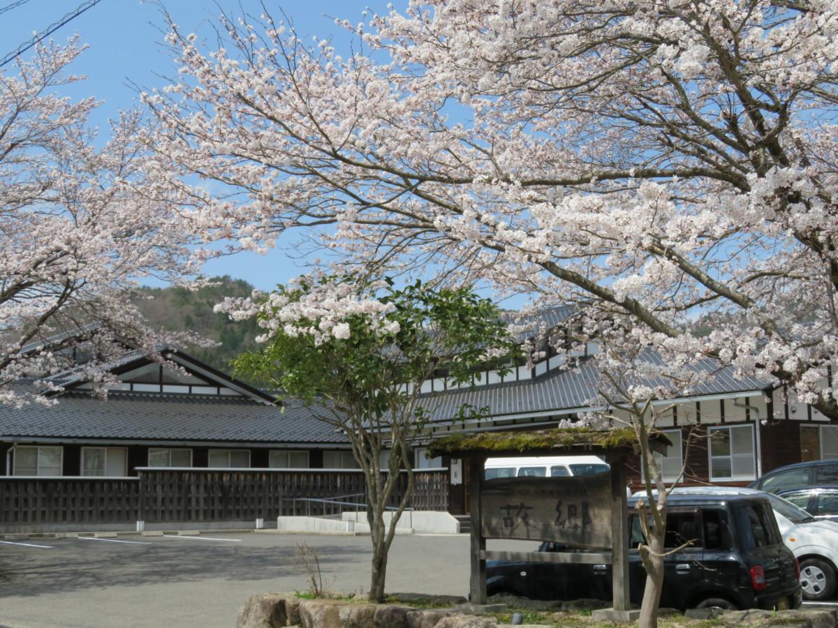 ふる郷外観と桜